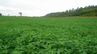 Çiftçi için son 'yem bitkisi desteği' uyarısı: 1 Eylül tarihini es geçmeyin!