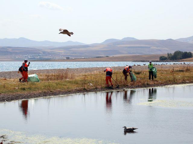 Van Gölü'ndeki martılar açlıktan ve susuzluktan öldü